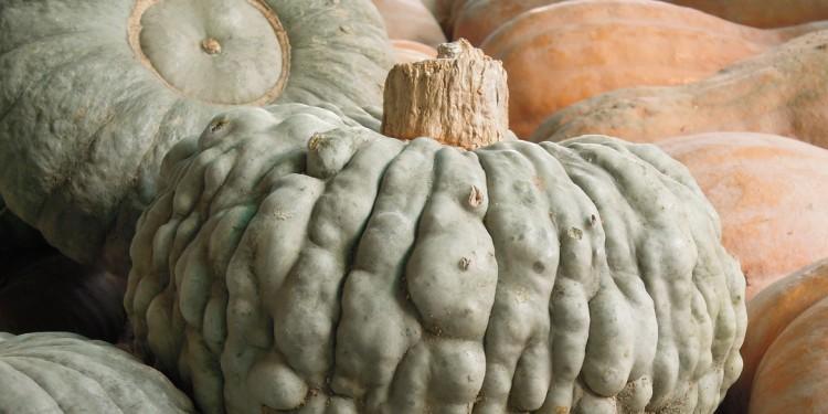 Ristorante Novara - Osteria del Mercato, cucina Piacetina